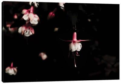 Fuschia Pink Canvas Art Print