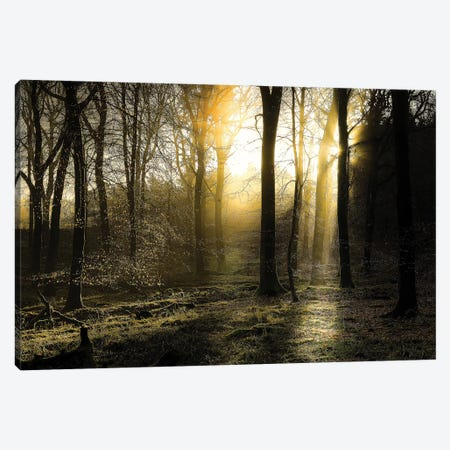 Autumn Lights Canvas Print #INO1} by Adelino Gonçalves Canvas Art