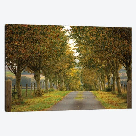 Colors Of Autumn Canvas Print #INO2} by Adelino Gonçalves Canvas Art