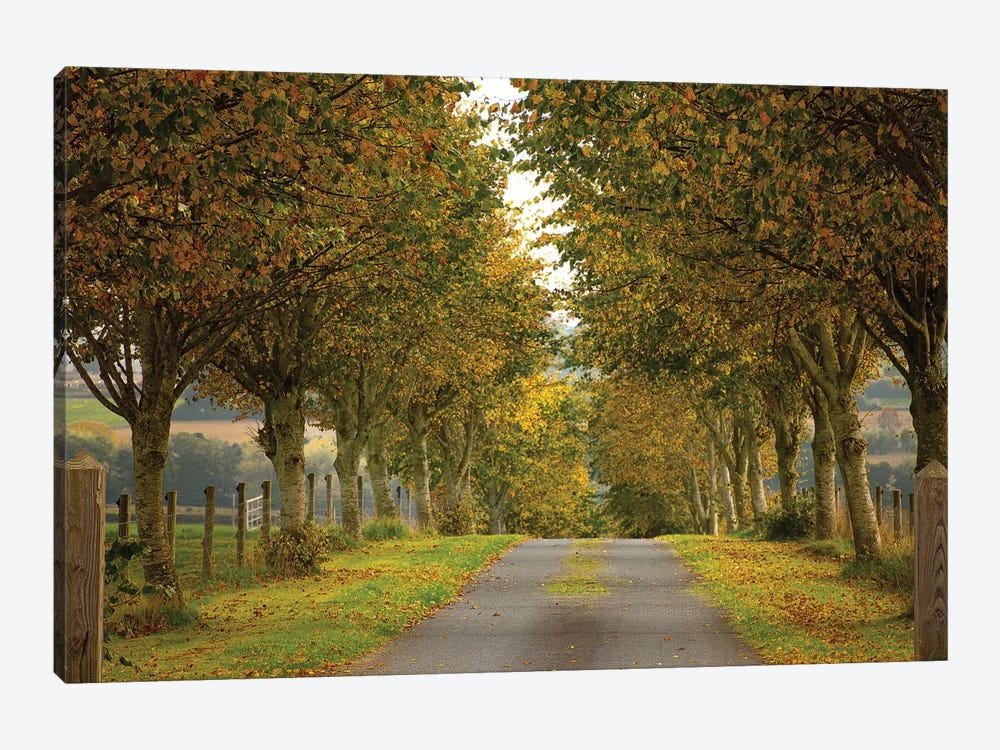 Colors Of Autumn by Adelino Goncalves 1-piece Canvas Wall Art