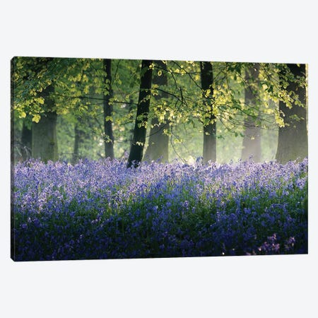 Last of The Bluebells Canvas Print #INO7} by Adelino Goncalves Art Print