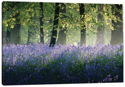 Last of The Bluebells Canvas Art Print