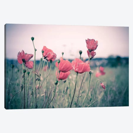 Pink Tulips Canvas Print #INO9} by Adelino Goncalves Canvas Wall Art