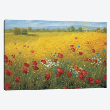 Sparkling Field I Canvas Print #INZ2} by Heinz Scholnhammer Canvas Art