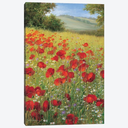 Sparkling Field II Canvas Print #INZ3} by Heinz Scholnhammer Canvas Wall Art