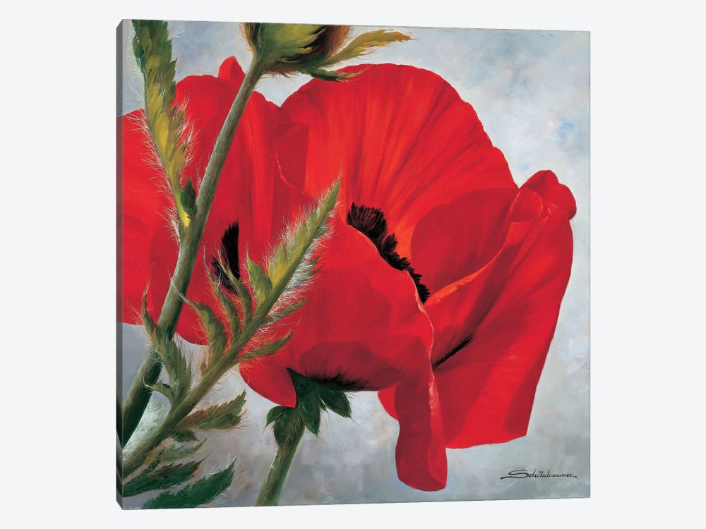 The Red Poppy by Heinz Scholnhammer 1-piece Canvas Art Print