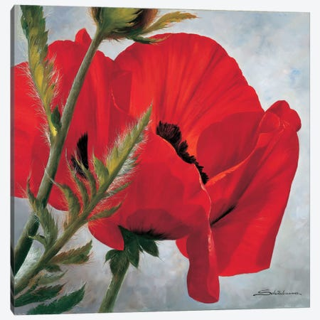 The Red Poppy Canvas Print #INZ4} by Heinz Scholnhammer Canvas Print
