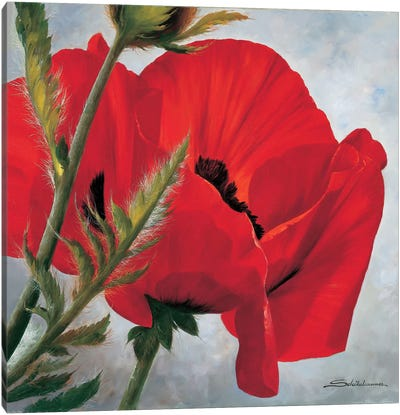The Red Poppy Canvas Art Print