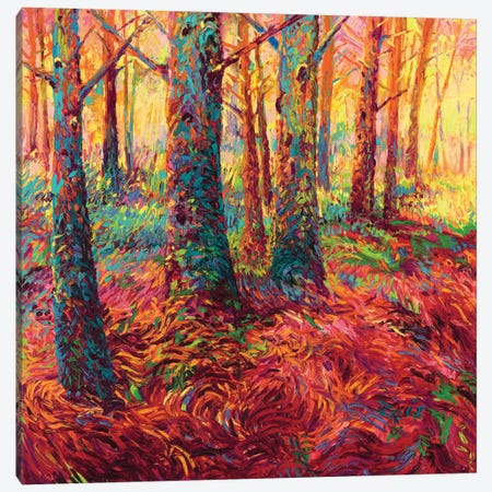 Redwood Fall Canvas Print #IRS102} by Iris Scott Canvas Art Print