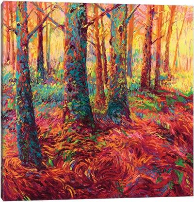 Redwood Fall Canvas Art Print