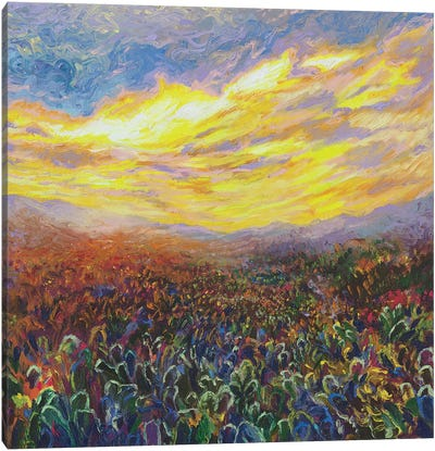 Cacti Sunrise by Iris Scott Canvas Wall Art