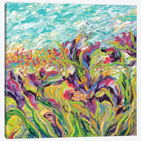 Irises I Canvas Print #IRS108} by Iris Scott Canvas Print