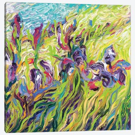 Irises II Canvas Print #IRS109} by Iris Scott Art Print