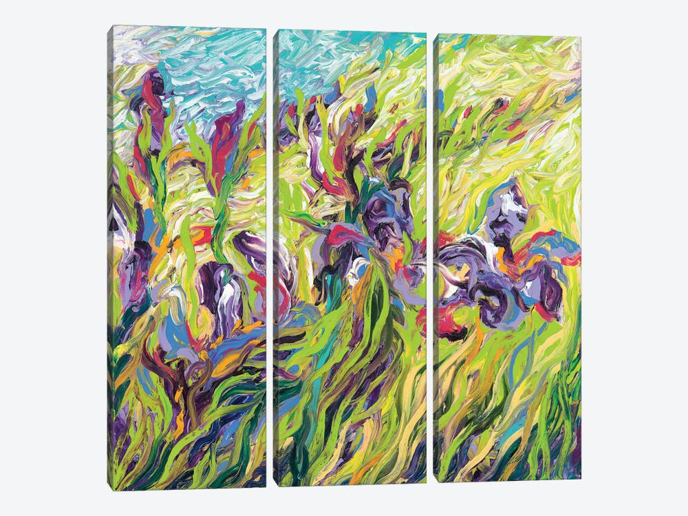 Irises II by Iris Scott 3-piece Canvas Art