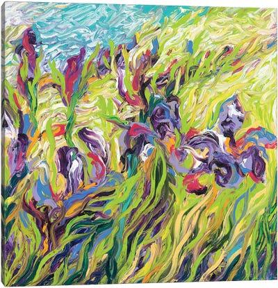 Irises II Canvas Art Print