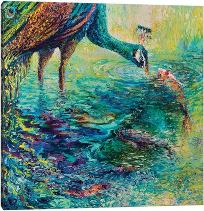 Peacock Diptych Panel II Canvas Print #IRS124