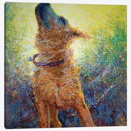 Phoebe's Reign Canvas Print #IRS126} by Iris Scott Canvas Art