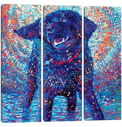 Canines & Color Canvas Art Print