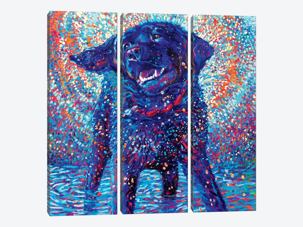 Canines & Color by Iris Scott 3-piece Canvas Art