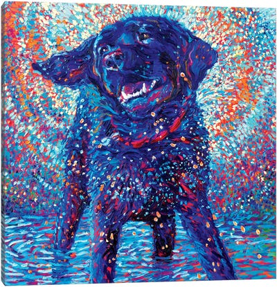 Canines & Color Canvas Art Print