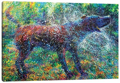 Canis Major Canvas Art Print