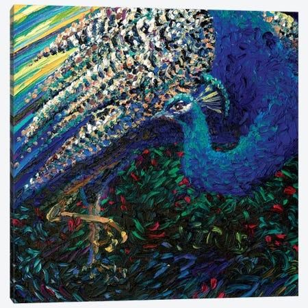Black Peacock Diptych Panel II Canvas Print #IRS150} by Iris Scott Canvas Artwork