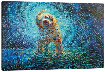 Labrador Jazz Canvas Print #IRS160