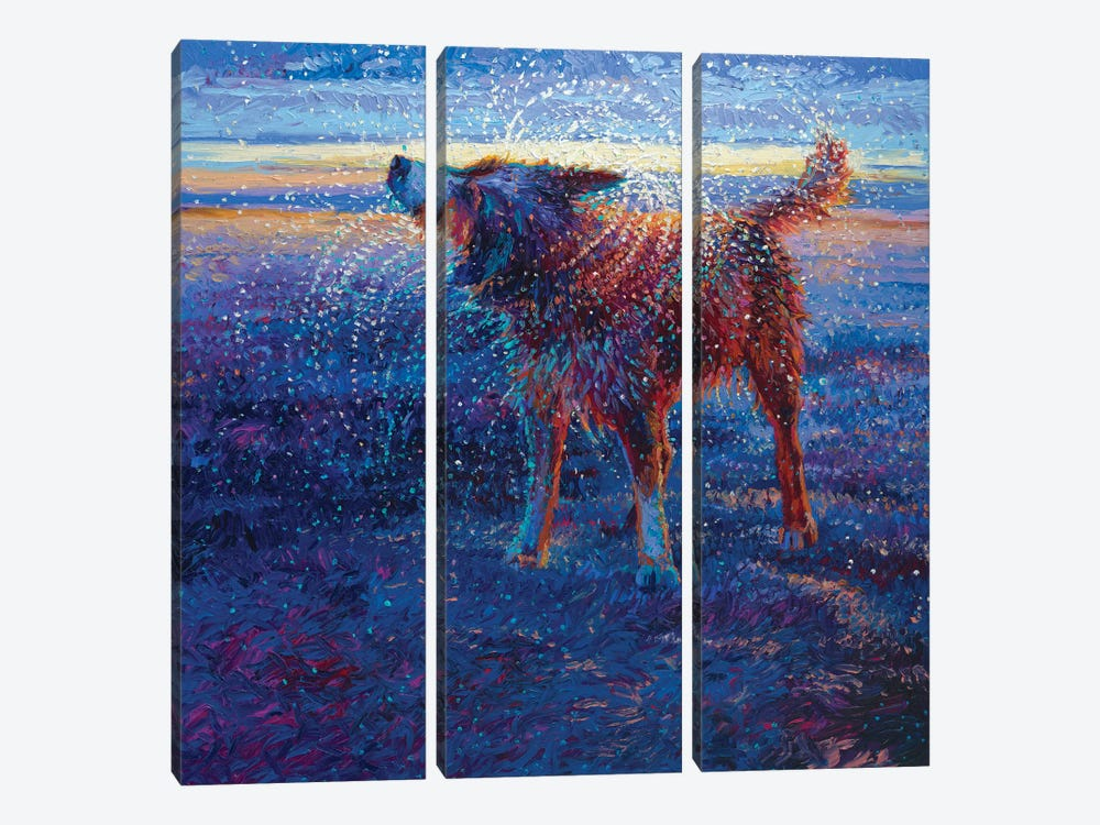 Coastal Canine by Iris Scott 3-piece Canvas Art Print