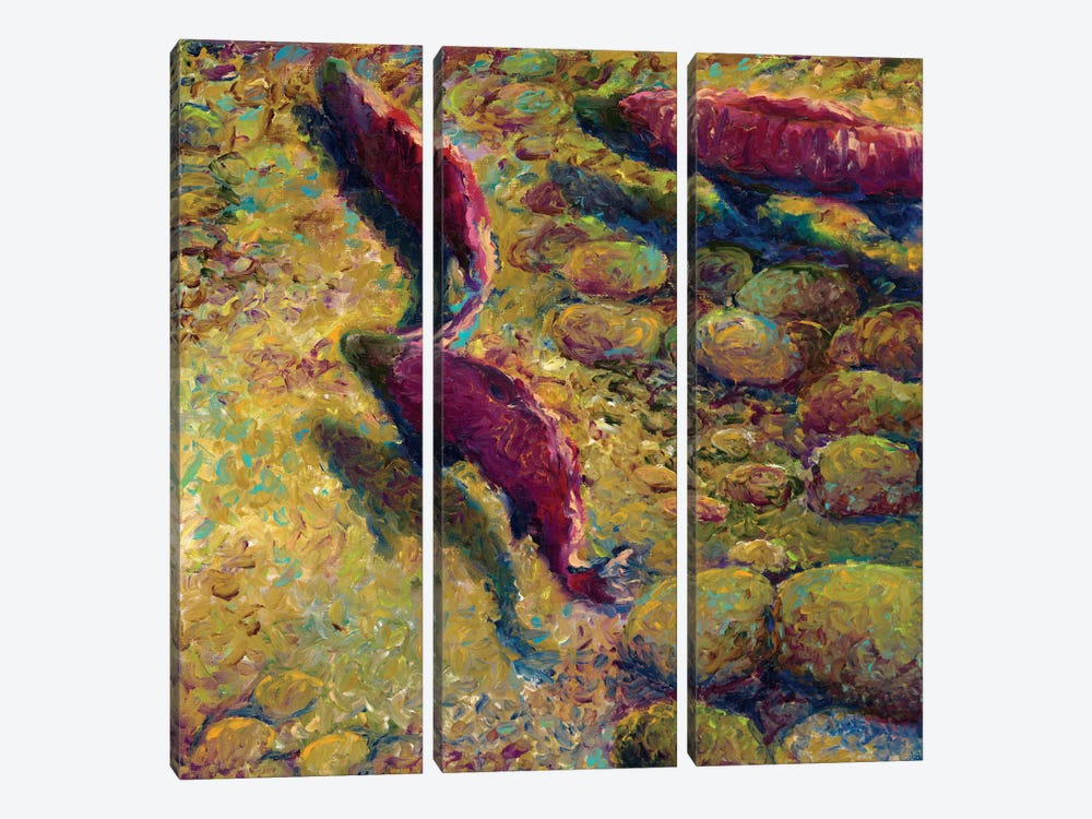 Cork Creek 3-piece Canvas Print