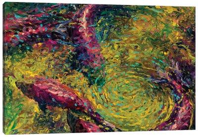 December Sockeye Canvas Art Print