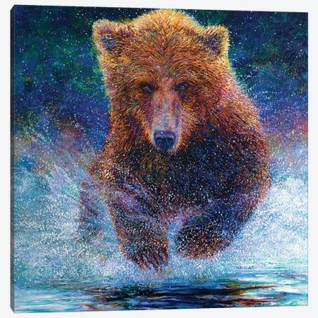 Arctos Canvas Print #IRS205} by Iris Scott Canvas Art Print