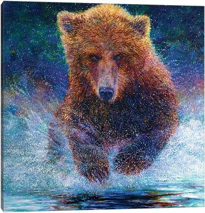 Arctos Canvas Art Print