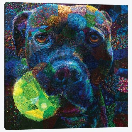 Oculi Canvas Print #IRS255} by Iris Scott Canvas Artwork