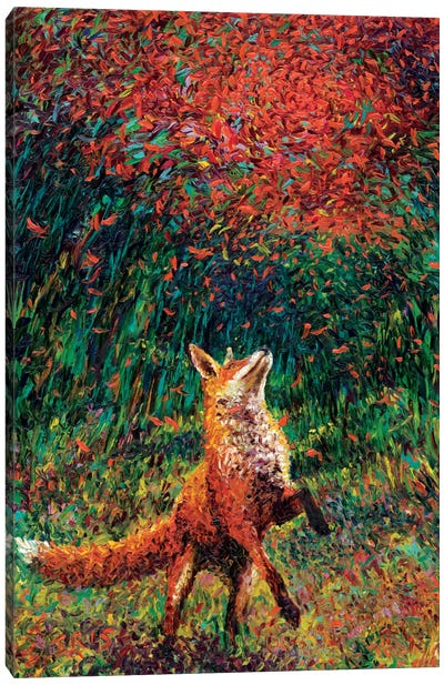Fox Fire Canvas Print #IRS26