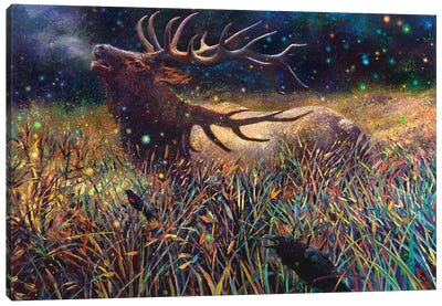 Wapiti Canvas Art Print