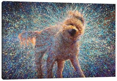 Canis Rufus Canvas Art Print
