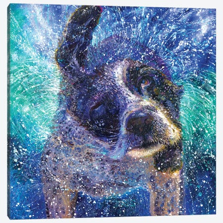 Spinning Spaniel Canvas Print #IRS306} by Iris Scott Canvas Wall Art