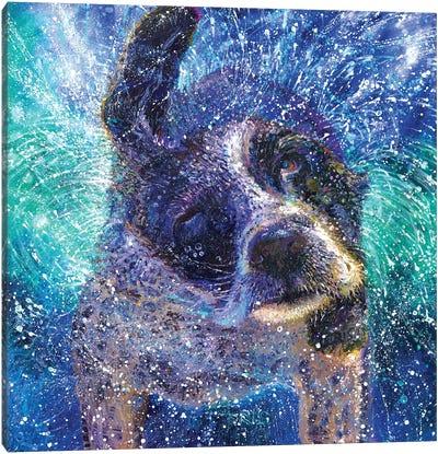 Spinning Spaniel Canvas Art Print