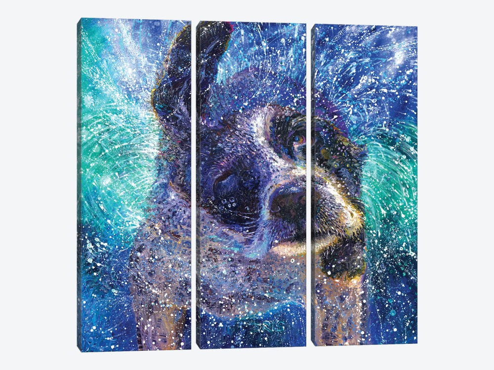 Spinning Spaniel 3-piece Canvas Wall Art