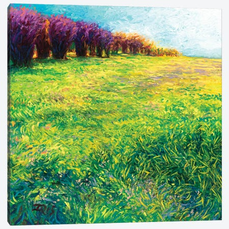 Aspens In Jackson Canvas Print #IRS3} by Iris Scott Canvas Art Print