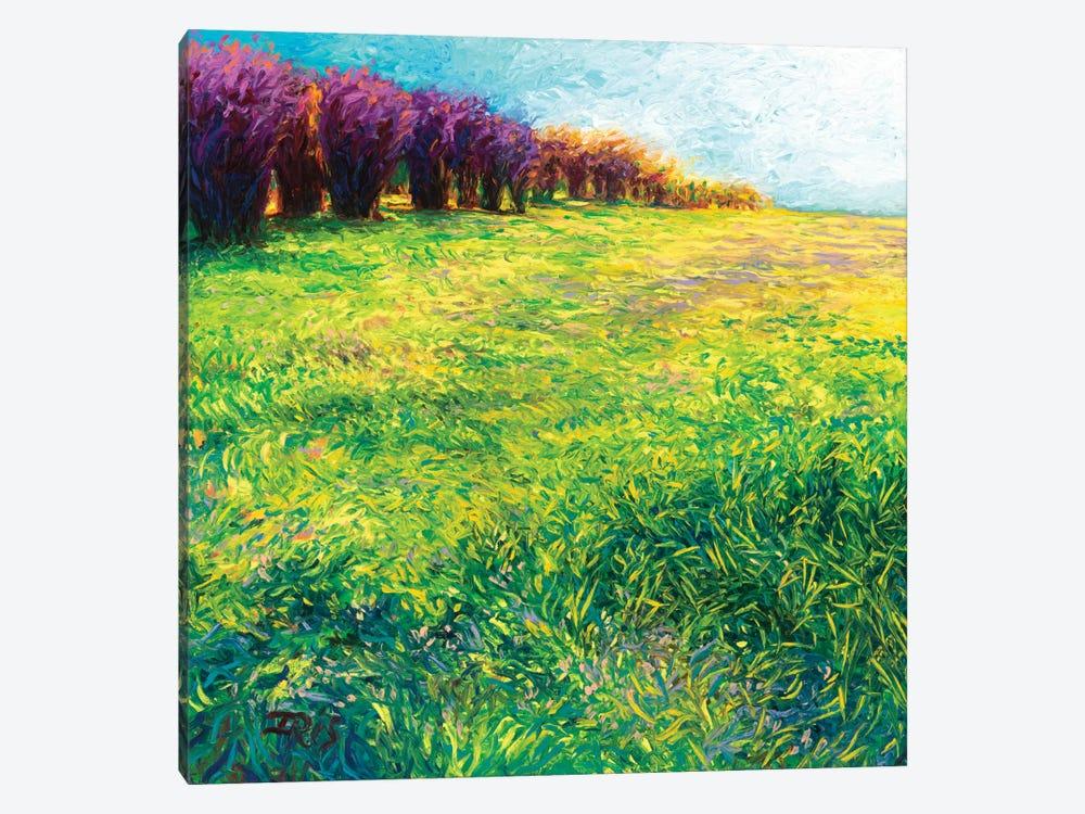 Aspens In Jackson by Iris Scott 1-piece Canvas Art