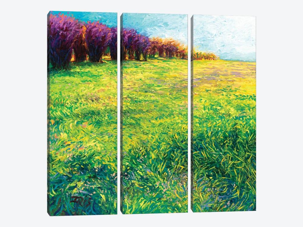 Aspens In Jackson by Iris Scott 3-piece Canvas Artwork