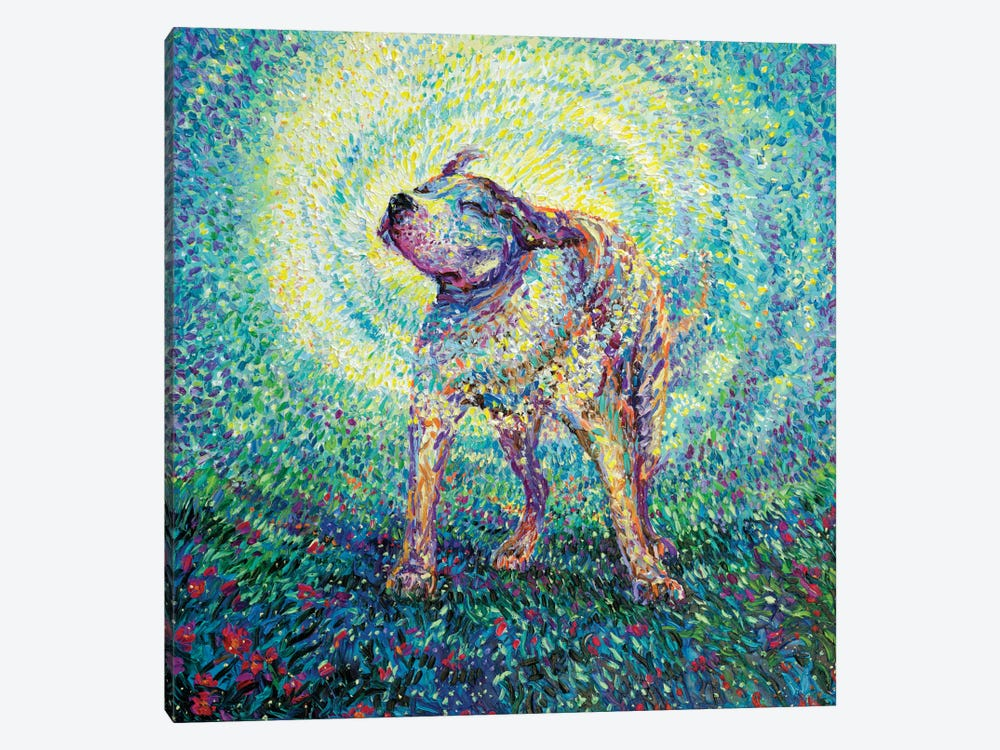 Pitbull Shake by Iris Scott 1-piece Canvas Art