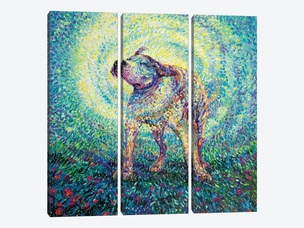 Pitbull Shake by Iris Scott 3-piece Canvas Art