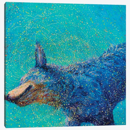 Shaking Blue Heeler Canvas Print #IRS65} by Iris Scott Canvas Wall Art