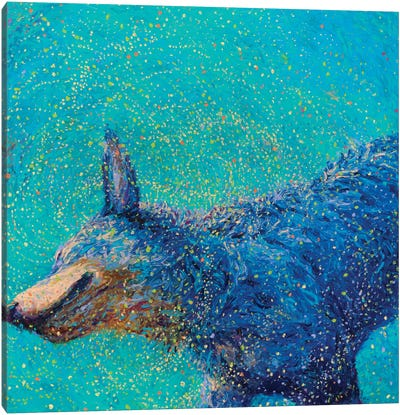 Shaking Blue Heeler Canvas Art Print