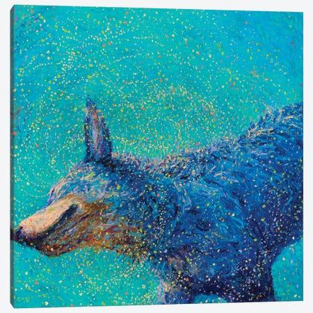 Shaking Blue Heeler Canvas Print #IRS65} by Iris Scott Canvas Wall Art