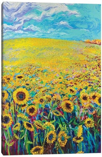 Sunflower Triptych Panel I Canvas Print #IRS74