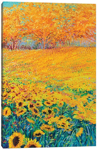Sunflower Triptych Panel III Canvas Print #IRS76