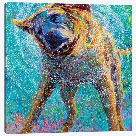Sunset Swim Canvas Print #IRS77} by Iris Scott Art Print